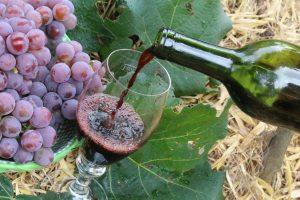 Vinhos produzidos nas vinícolas